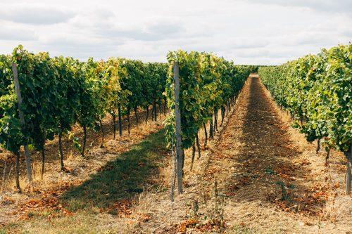 Sostegno del settore vitivinicolo e olivicolo