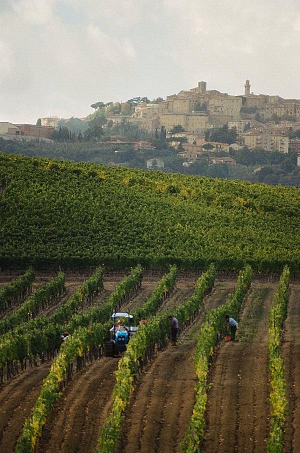 Montepulciano, il territorio iscritto nel Registro dei Paesaggi Rurali Storici