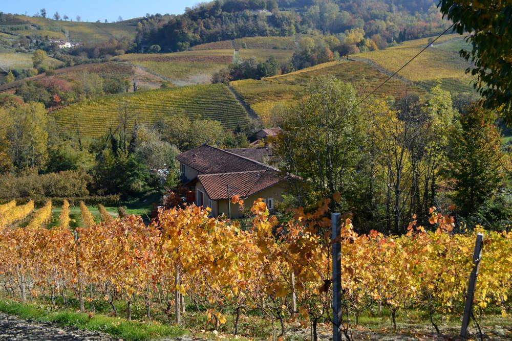 Sostenibilità ambientale e amore per ottimi vini