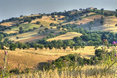 ArcheoVino: dalla vite silvestre al Morellino di Scansano
