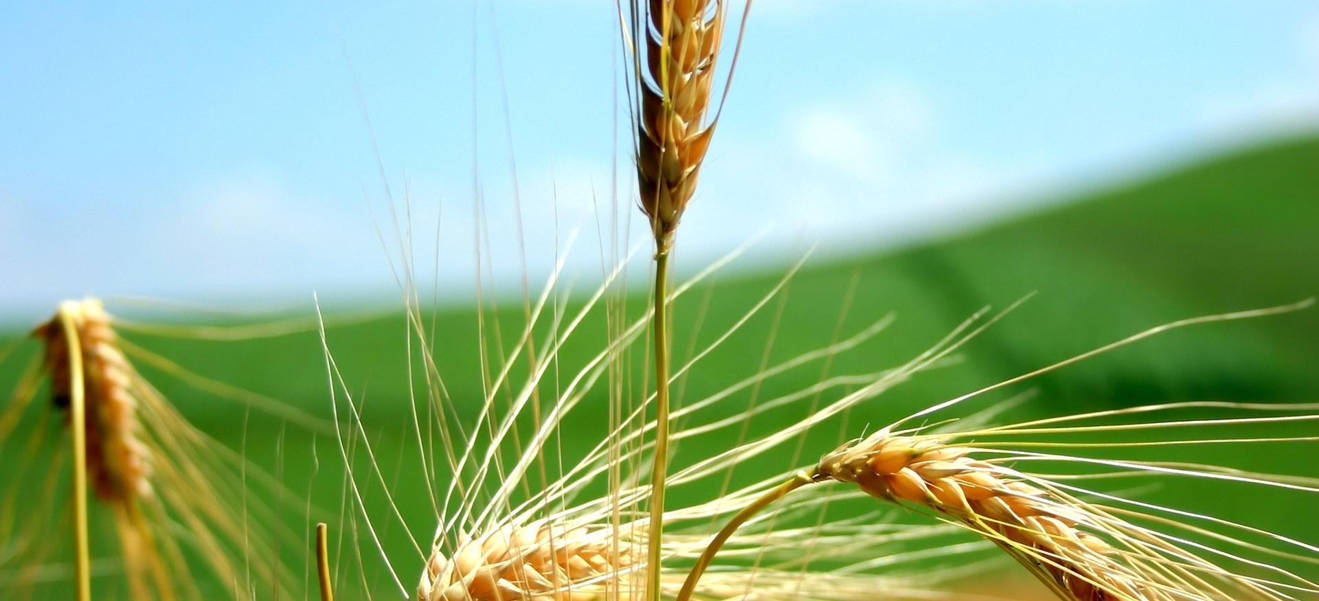 Mipaaf: decreto agricoltura è legge