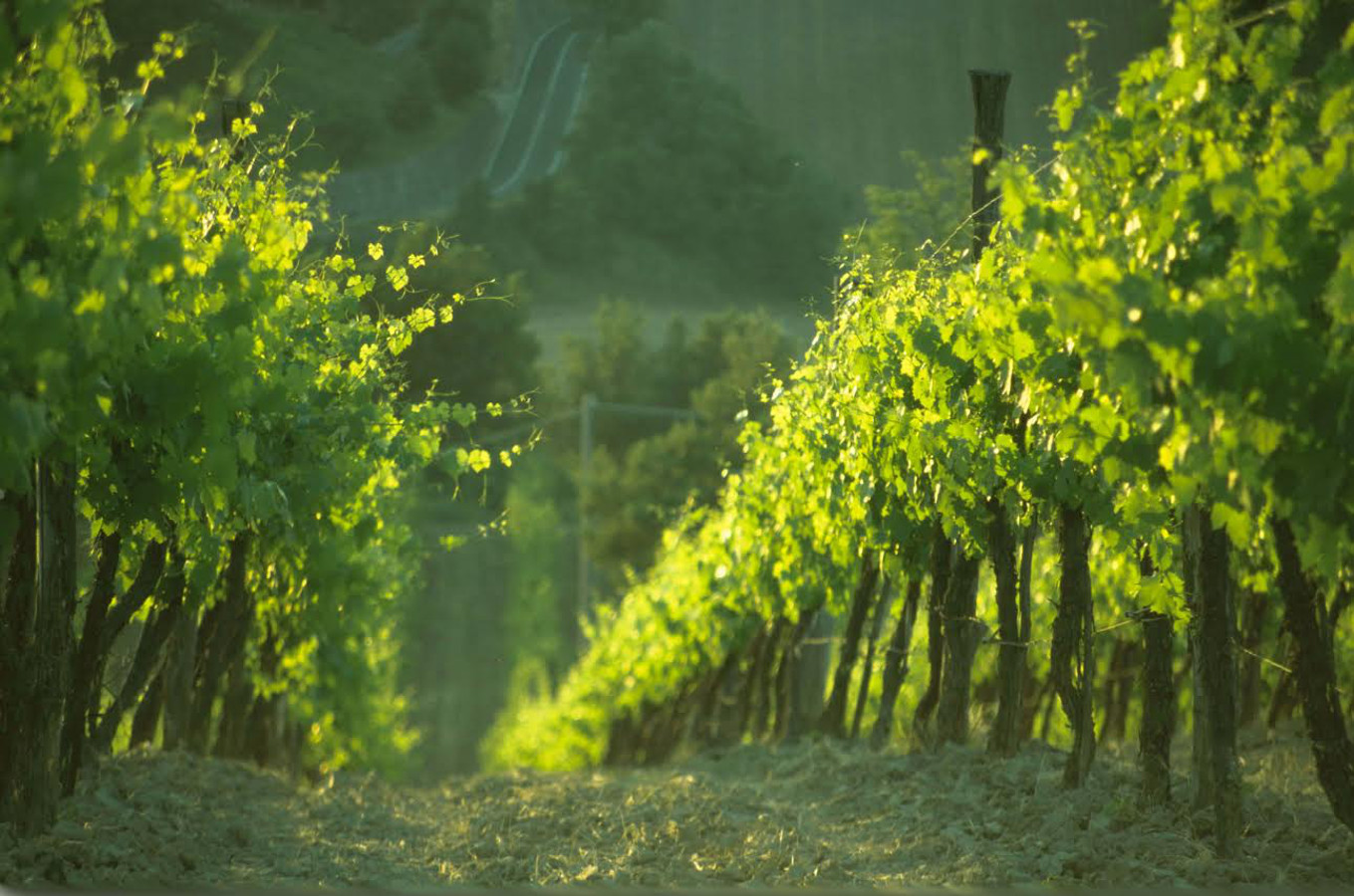 Il vino si degusta in Rocche, Parchi e Borghi medioevali