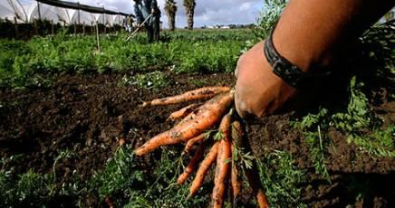 Approvata la legge sull'agricoltura sociale
