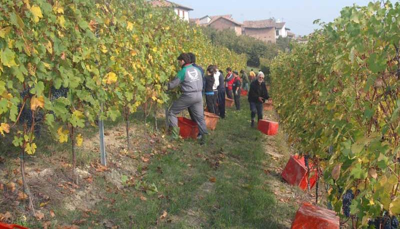 Istituti Agrari: i vini migliori in rassegna al Vinitaly