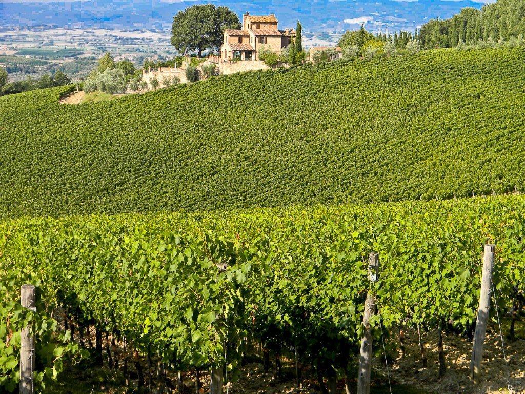 Al via il Master su vini italiani e mercati mondiali