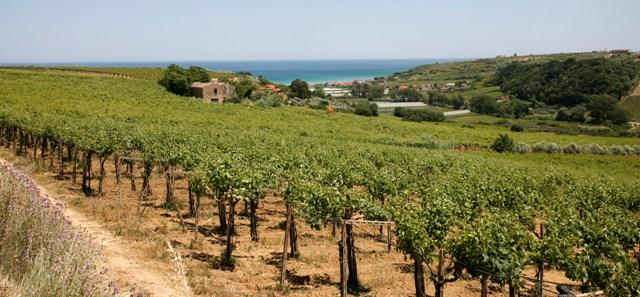 Dall'Abruzzo le prime guide on-line delle Città del Vino