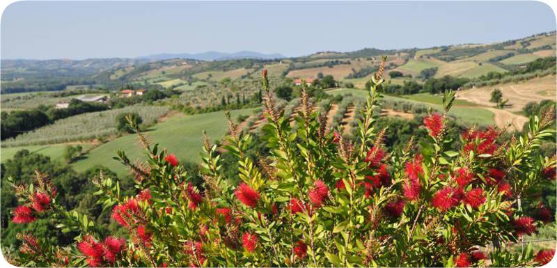 Master of Wine: Campania protagonista