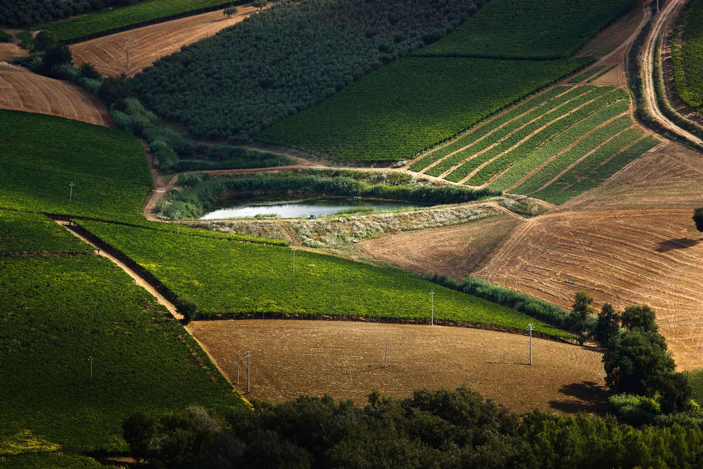 Ricerca, Mipaaf: finanziato piano sviluppo biotecnologie sulle principali colture italiane