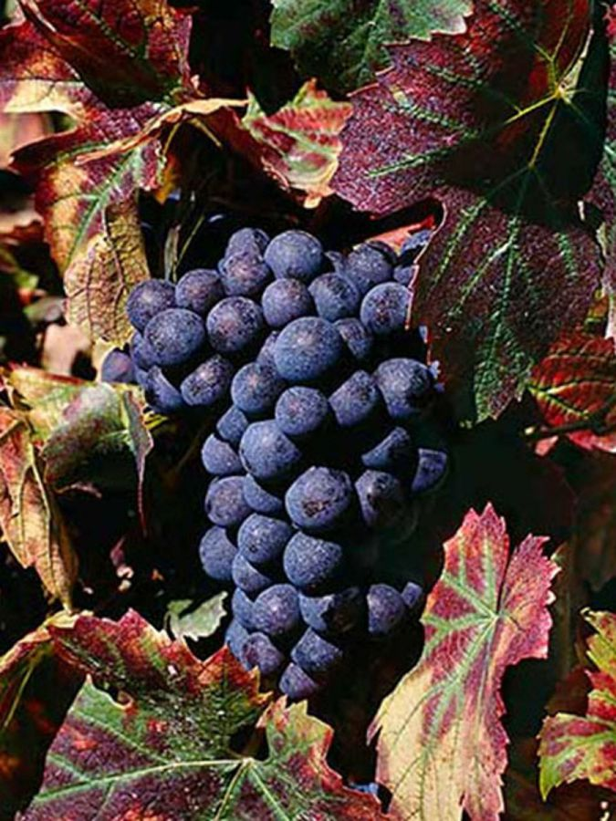 1966-2016: auguri al Vino Nobile di Montepulciano