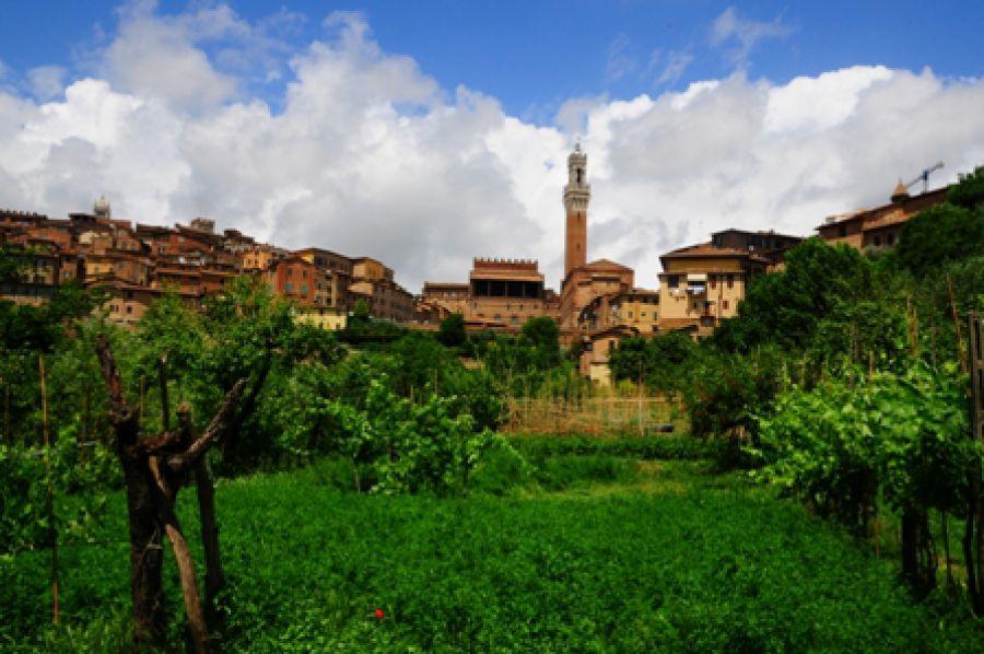 Senarum Vinea: Città del Vino presenta le antiche vigne della città
