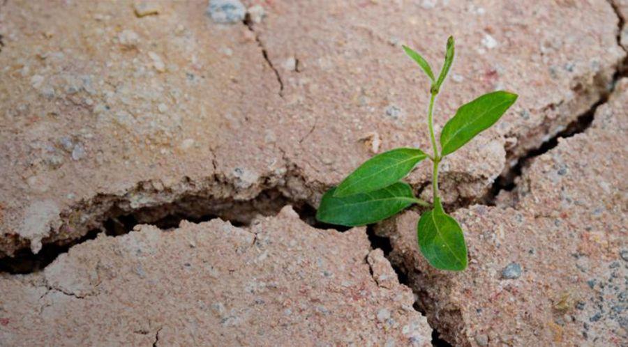 Cibo e sostenibilità: costruire il nostro futuro
