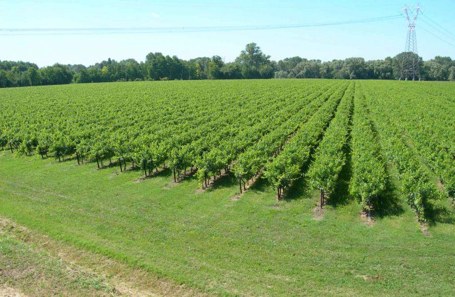 Il gusto... digitale del vino italiano. La ricerca 2016