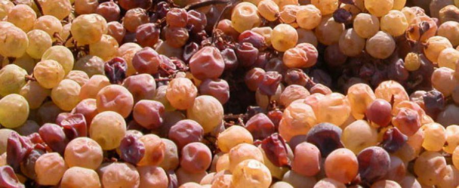 Passitaly: in autunno una manifestazione dedicata ai vini passiti d'Italia