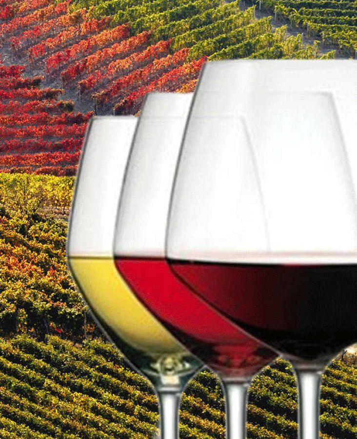 Monferrato&Vino: la Memoria del Futuro