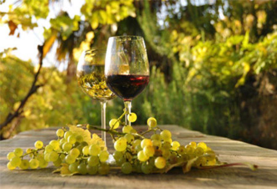 Il vino biologico e biodinamico, se ne parla a Montepulciano (Siena)