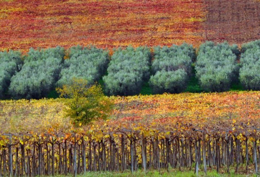 Vigne, paesaggi ed enoturismo in Abruzzo. Città del Vino entra in cabina di regia