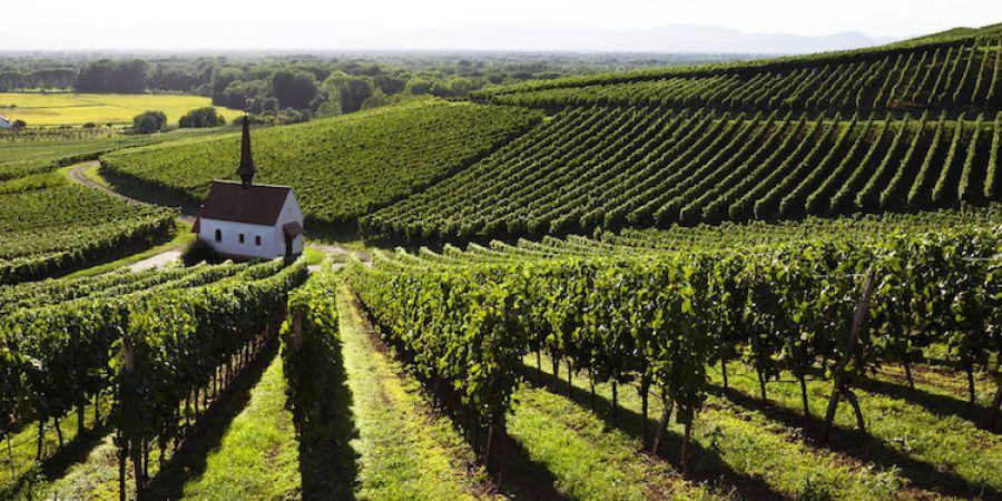 Testo Unico del Vino, ora è legge