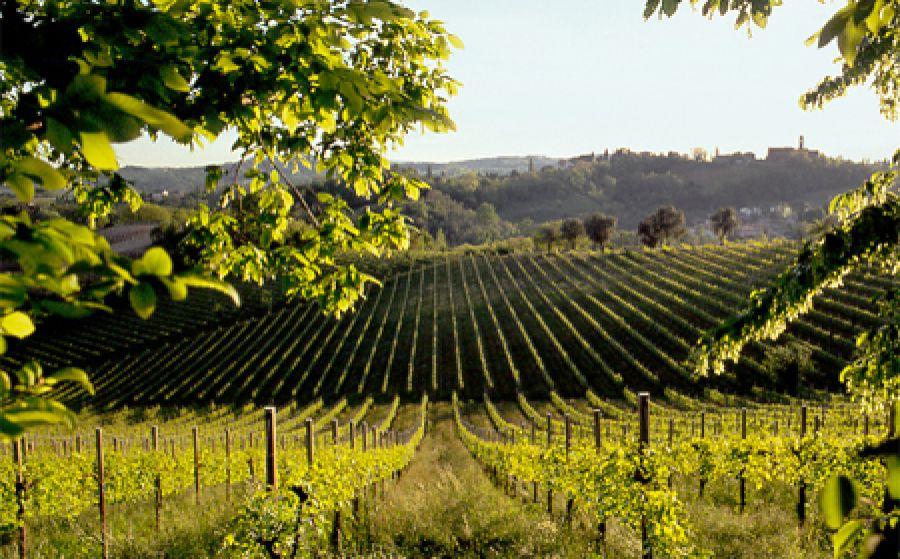 Mipaaf: firmata la candidatura Unesco delle colline del Prosecco Conegliano-Valdobbiadene