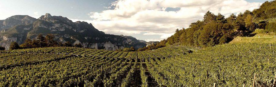 Trentodoc sulle dolomiti Val di Fassa