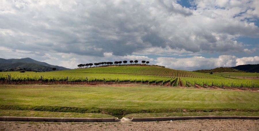 Tre Consorzi di Tutela insieme nella promozione internazionale del vino della Maremma Toscana