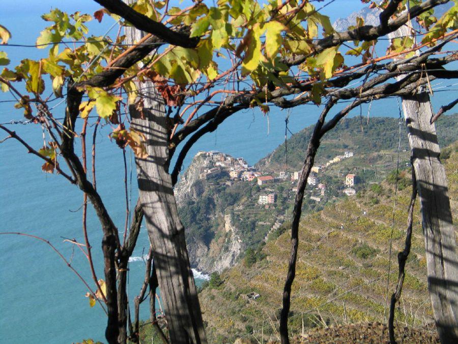 Enoregioni italiane: Riviera di Levante