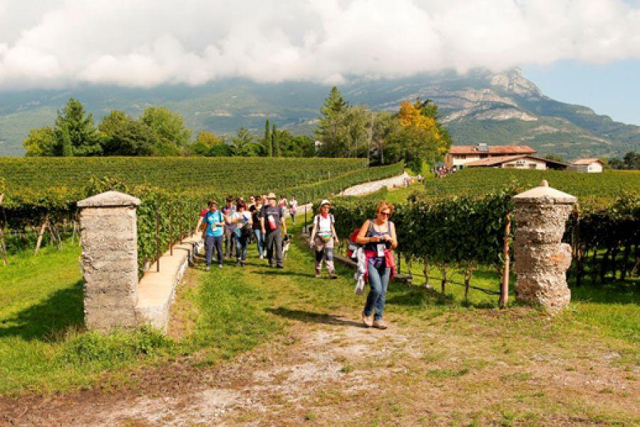 Comuni e Strade del Vino nello sviluppo dell'enoturismo in Italia