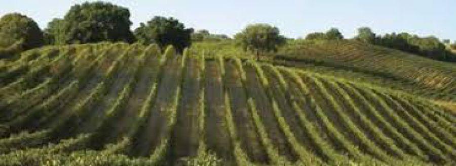 Vino italiano in Sud Africa e Mozambico