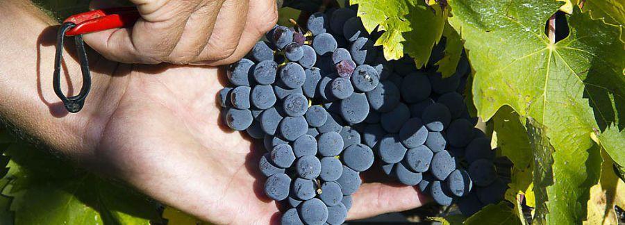 VII Corso Appassimento delle Uve e Qualità dei Vini