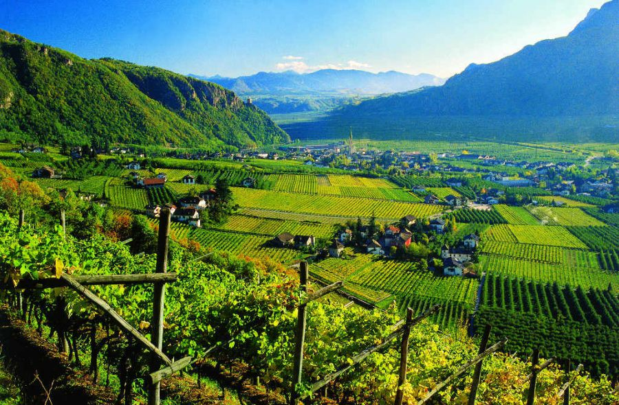 Nasce Alto Adige Wine Summit