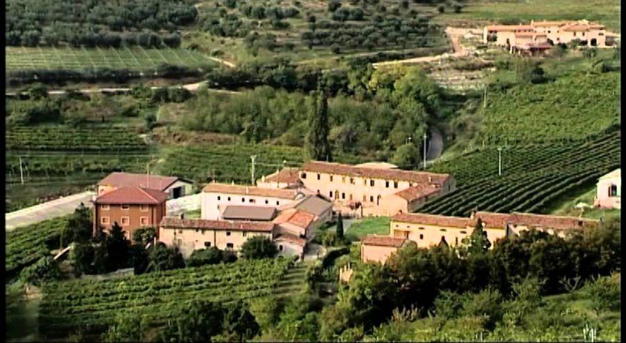Elmo, un nuovo antico vitigno per la Valpolicella