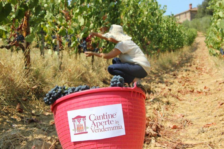 Vendemmia in Toscana. Le mani nel vino