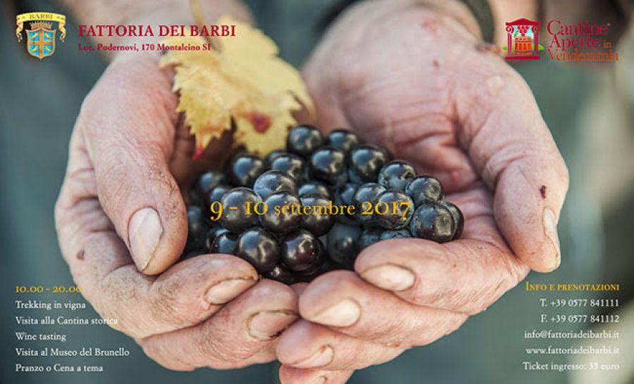 A Montalcino si festeggia la vendemmia