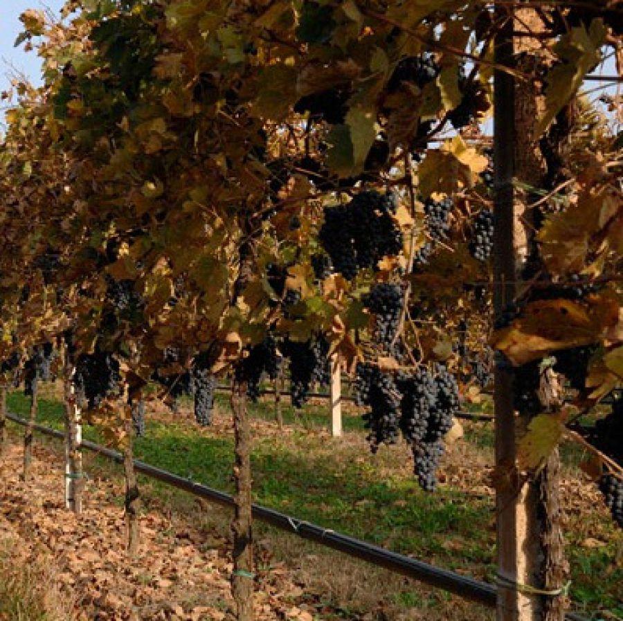 Enoregioni italiane: Pianura Occidentale