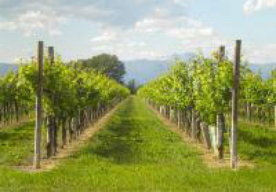 Enoregioni italiane: Pianura Orientale