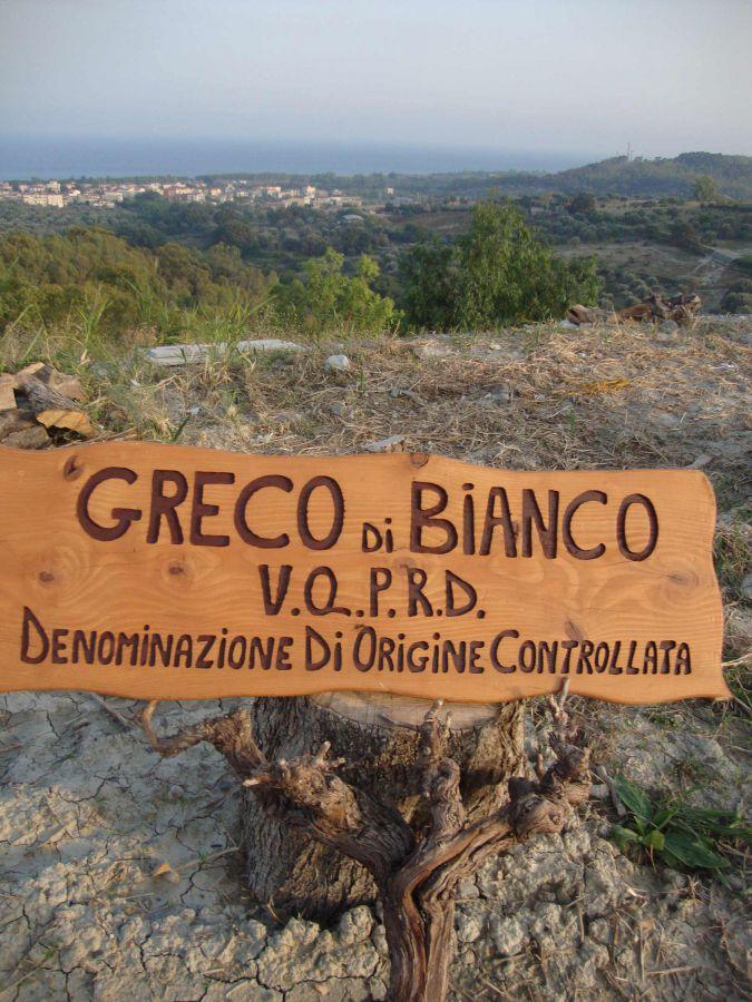 Alla scoperta del vino più antico d'Italia