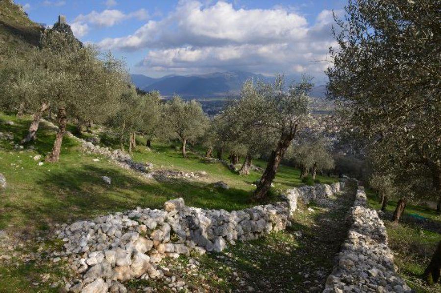 Paesaggi Rurali Storici: altre tre Città del'Olio vicine al traguardo