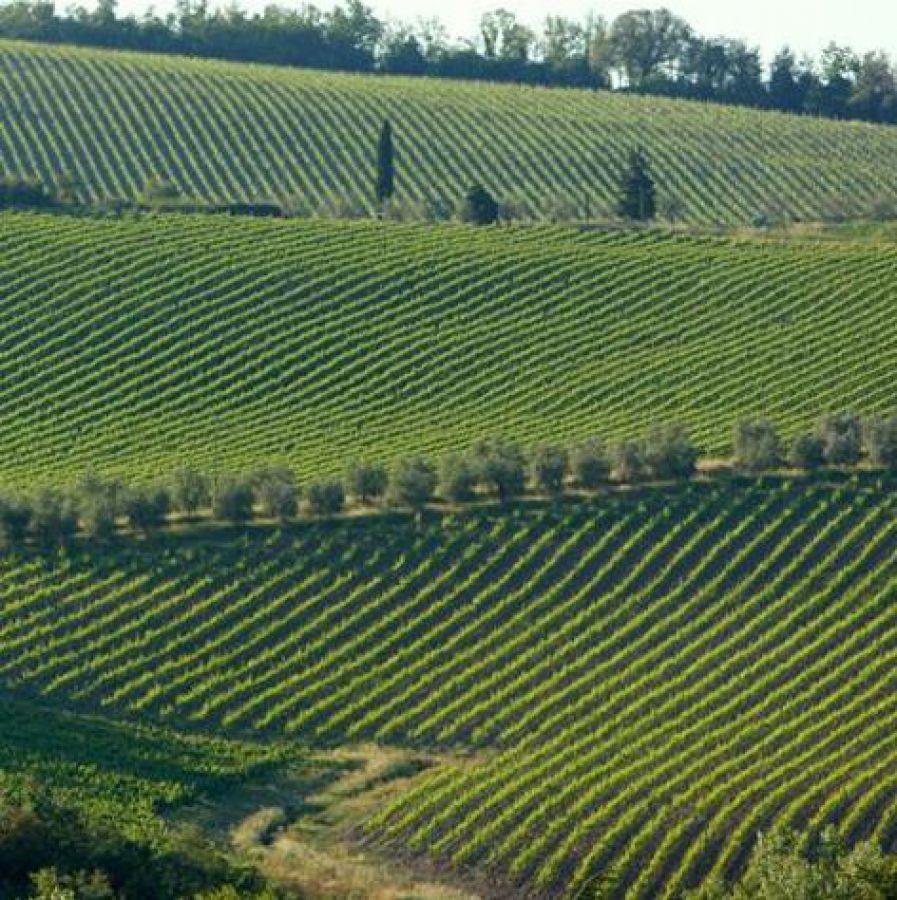 Gaiole in Chianti aderisce al distretto agroalimentare della Toscana del sud