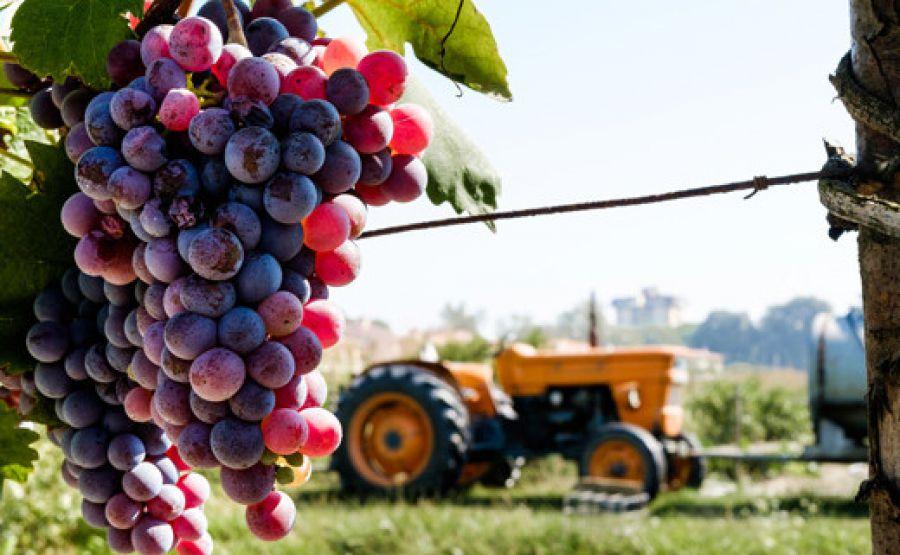 Riconoscimento sensoriale dei difetti dei vini