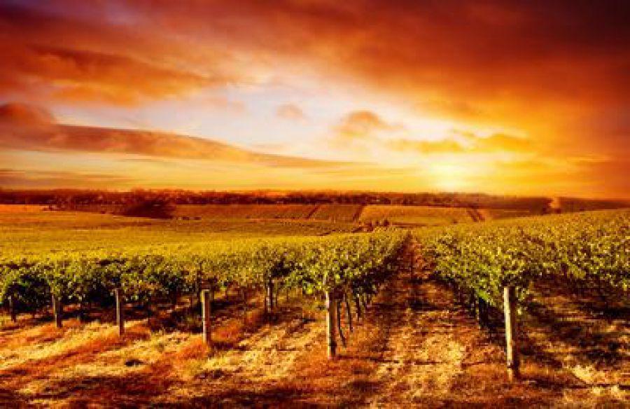 G7 Agricoltura: adottata all'unanimità la dichiarazione di Bergamo