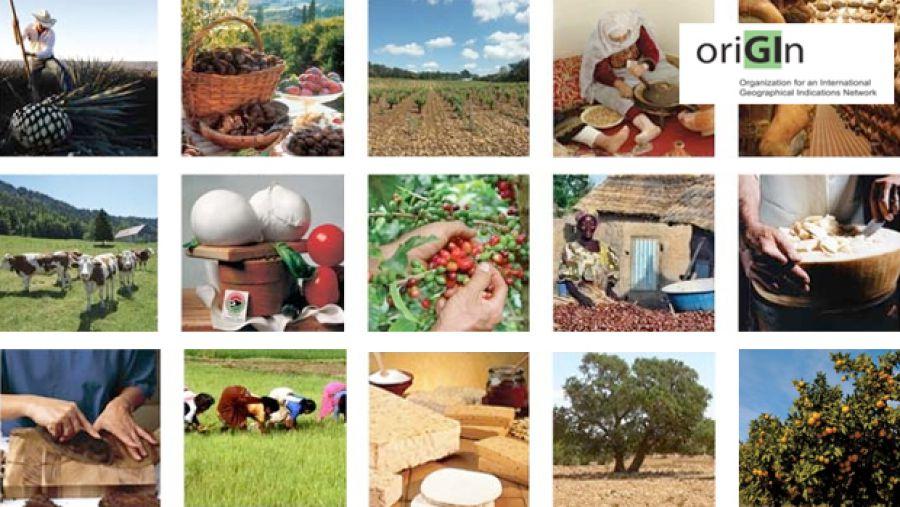 Indicazioni Geografiche: protezione online e sostenibilità