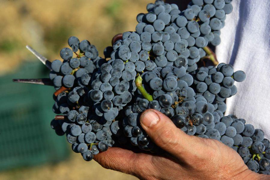 Montecucco e Maremma Toscana: un novembre tutto da gustare