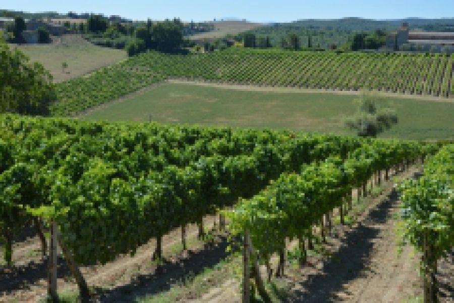 Colline del Chianti al Florence Wine Event