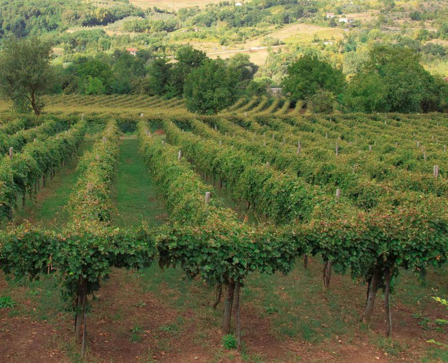 Enoregioni italiane: Irpinia