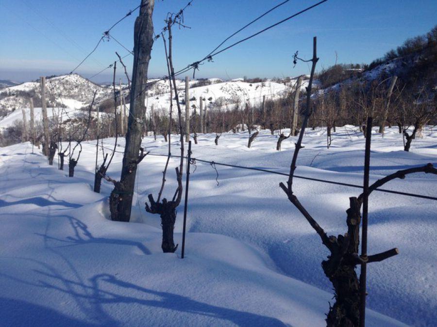 E' a Modigliana la prima degustazione di vini del nuovo anno