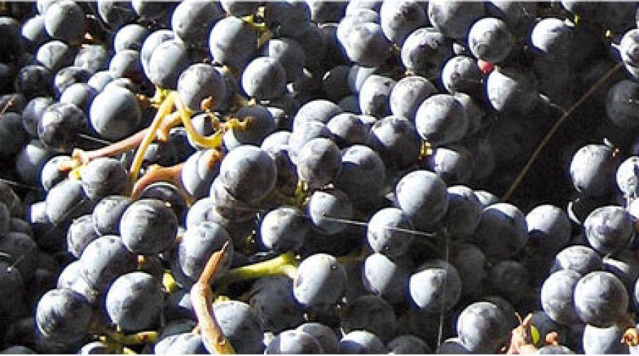 Il cambiamento climatico cambierà anche il vino?