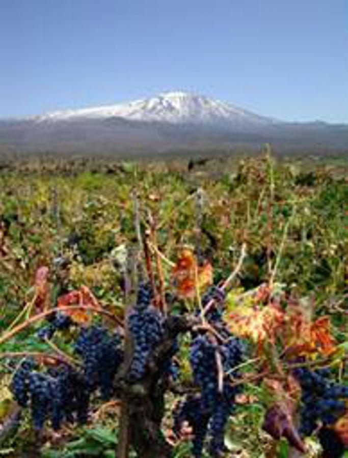 Enoregioni italiane: Etna