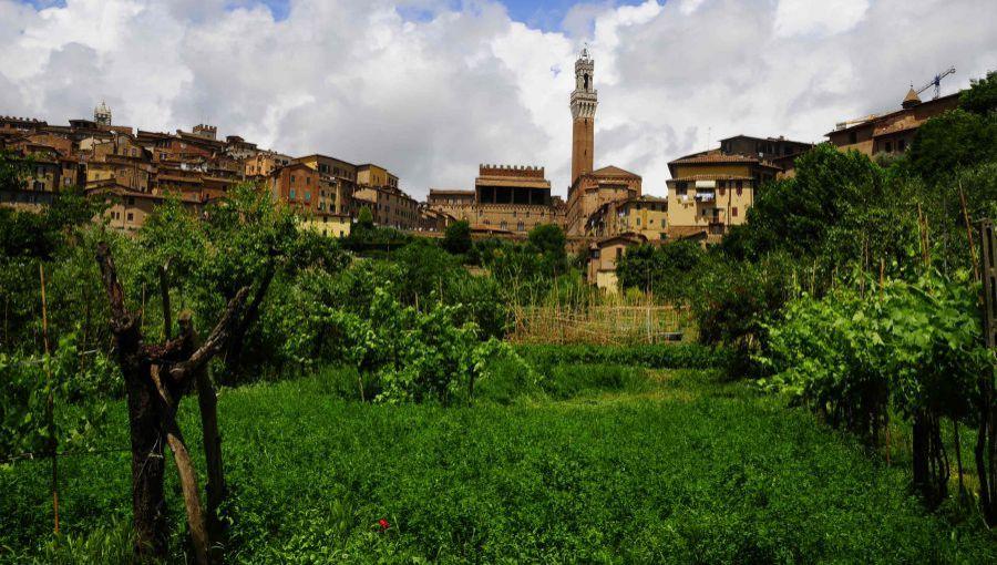 """Sta per nascere il """"vino di Siena"""""""