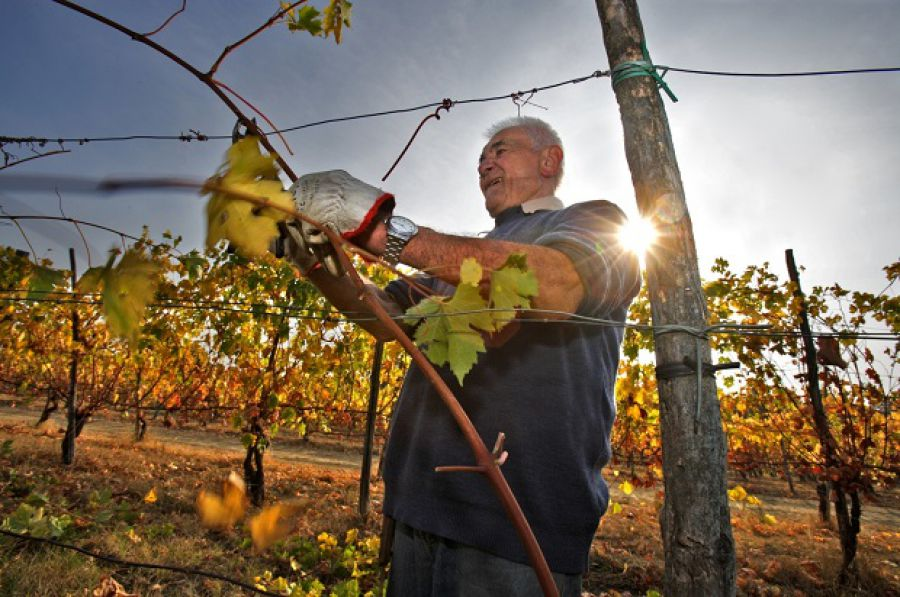 Il futuro della vitivinicoltura dell'Emilia Romagna