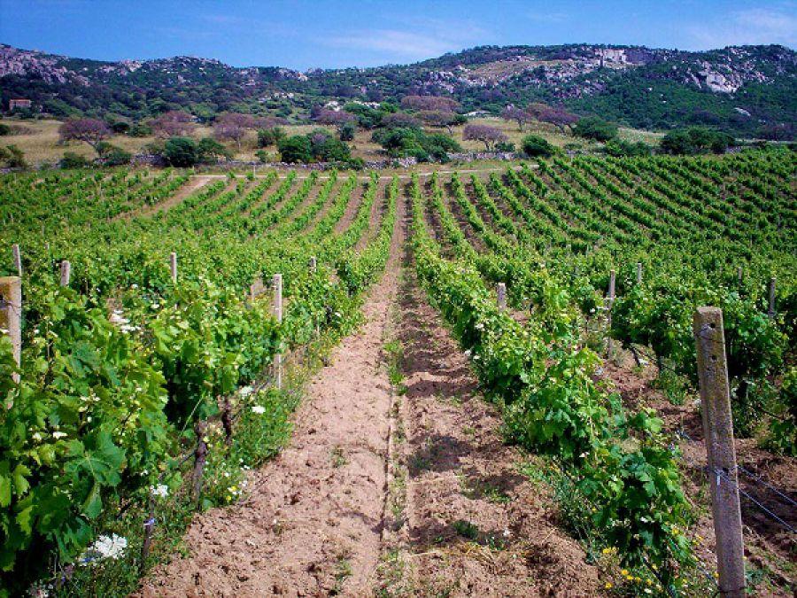 Enoregioni italiane: Gallura