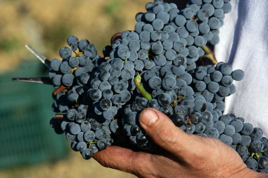 La Maremma Toscana in degustazione